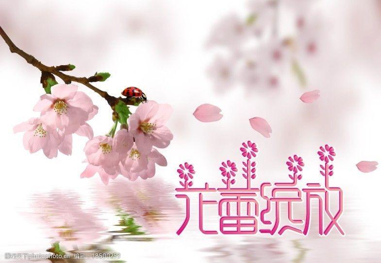 樱花广告花蕾绽放图片