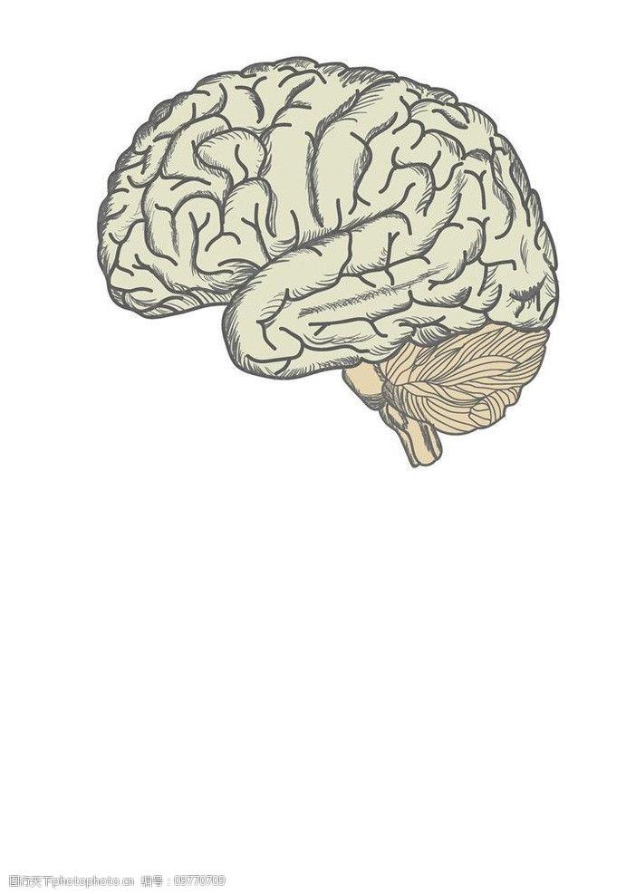 人脑大脑结构设计图片