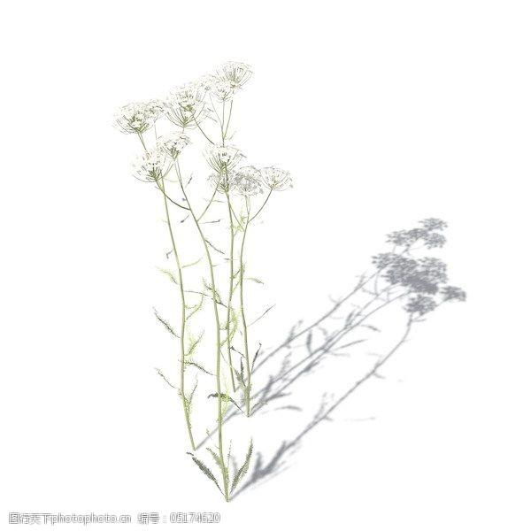 植物花草装饰素材室内装饰用品素材3d模型素材1