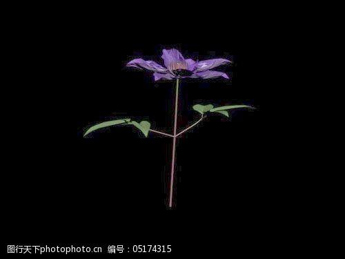 植物花草装饰素材室内装饰用品素材花草模型53