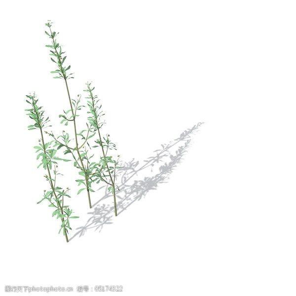 植物花草装饰素材室内装饰用品素材花草模型93