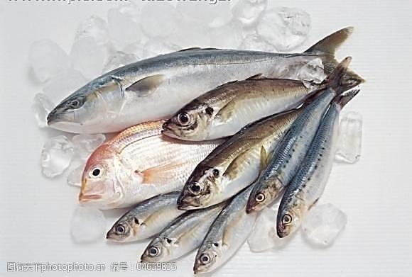 海鲜图片免费下载冰冻海鲜图片