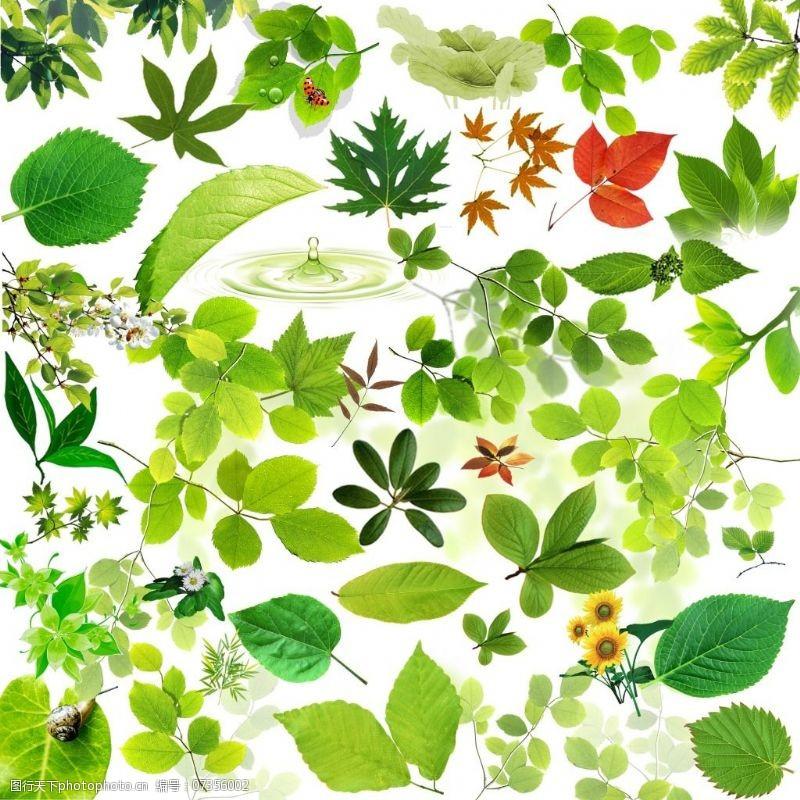 树叶图片免费下载高清树叶图片