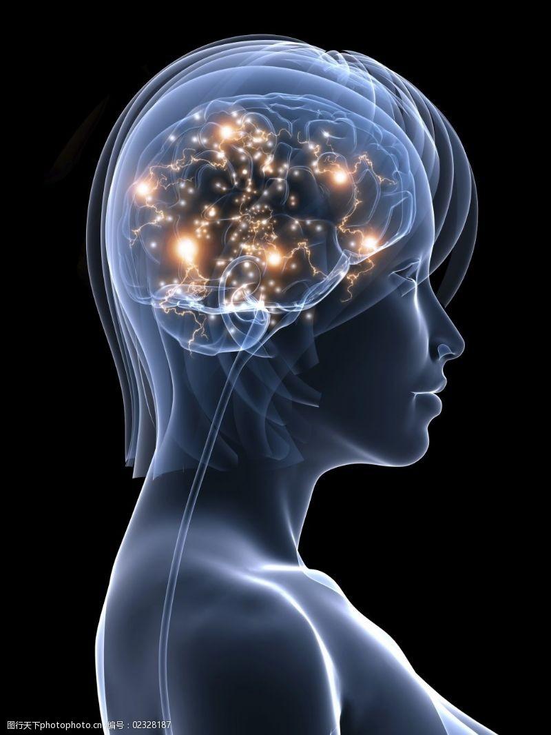 女人大脑时尚绚丽女性侧面大脑