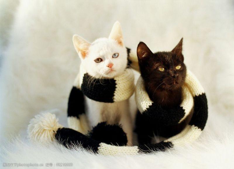 宠物之家黑白猫小猫图片